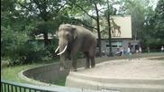 Ядосан слон с точен мерник! Смях!