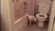 Тази котка се опита да се изходи на правилното място, но стана нещо друго !