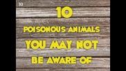 10-те отровни животни, които не са запознати