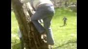 Момче Пада Яко От Дърво