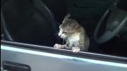Не пипай колата ти казах !!!
