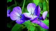 Малко Красиви Цветя