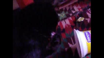 Черна котка краде кисело мляко