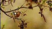 Радостта на птиците...