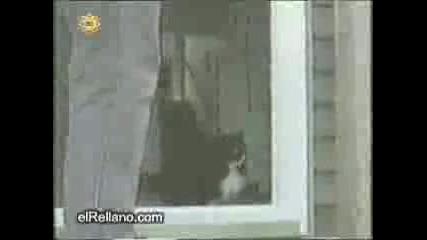 Котка Кретен