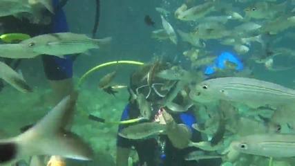 Diving in Marmaris - Дайвинг в Мармарис 2013