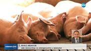 Русия спира вноса на свинско месо от България.