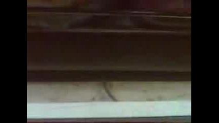 Мишка В Карнобатската Перла