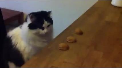 Сладко коте с големи умения.