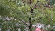 Котка На Дърво Или Къде Гнездят Градските Котки