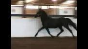 Horses- Blackyvid