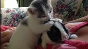 Аз Съм Коте И Обичам Зайчета..