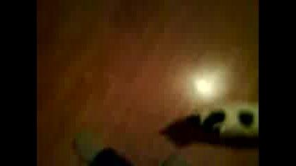 Котката Бойко