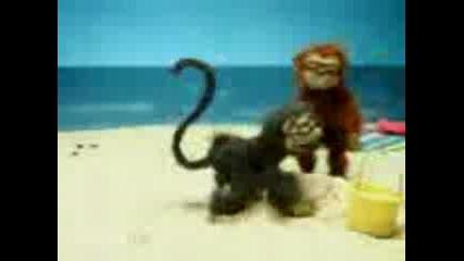 Палава Маймунка