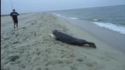 Тюлен в криза - голям базик с рибаря:)