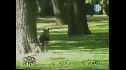 Куче в парка - голям смях