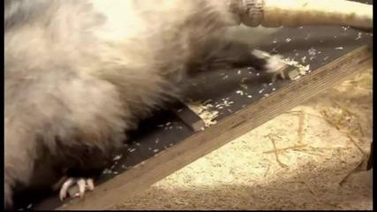 Опосумът Хайди е любимец на Германия.