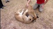 Силна дружба между куче и лъвчета