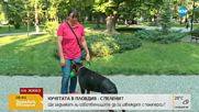 Кучетата в Пловдив - с пелени?