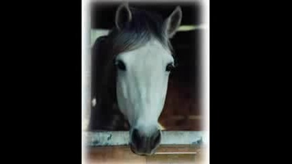 Please Stop Horse Slaughter!!!