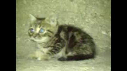 Котаче