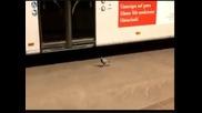 Тази птичка има голям късмет !