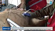 Експерти установиха: Лъвовете в разградския зоокът са болни и недохранени