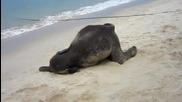 Малко Слонче Си Играе На Плажа