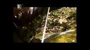 Вълчаново кале - Лъвската глава