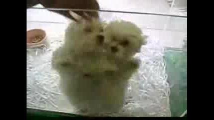 Много Сладки Кученца Танцуват