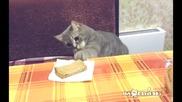 Котето е гладно и не може да чака повече позволение за закуска