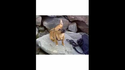 Куче Пее Фламенко