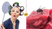 Какво всъщност се случва с храната, ако на нея кацне муха? А с нас?