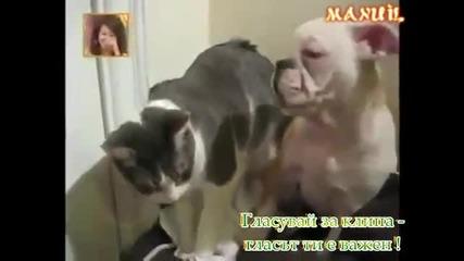 Тази Котка Го Спука От Бой ( смях ) !