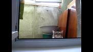 ! Нинджа котка винаги ви гледа !