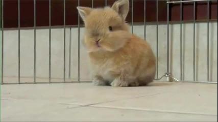 Много сладки зайчета