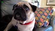 Виновни Кучета Супер Компилация - Смях