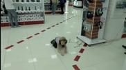 Малкото русначе побесня в супермаркета !