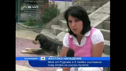 Нова телевизия - Новини - Инциденти - Глутница кучета нападнаха мъж от Рудозем