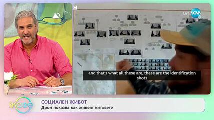 """Дрон показва как живеят косатките - """"На кафе"""" (17.06.2021)"""
