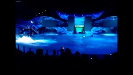 делфини през ноща