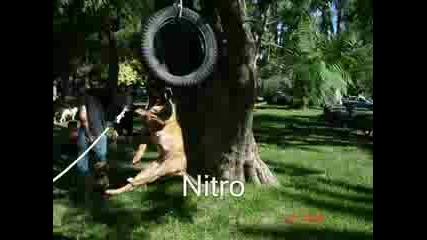 Perla & Nitro