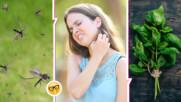 Ето как да отблъсквате комарите, без да давате пари за препарати
