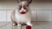 Зайче , което яде малини