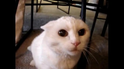 Нещо не се кефи тая котка