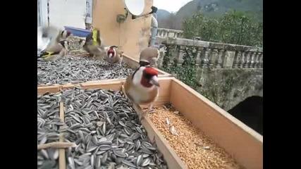 Птици - щиглец...!!!