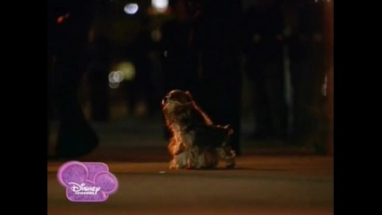 Dog's love Boi and Contessa Sharpay's fabulous adventure