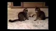 Най Смешното Видео С Котки Което Сте Видяли.