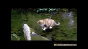 Котка лови рибиили поне се опитва ;d