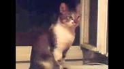 Коте се плаши от видео във Vbox7!